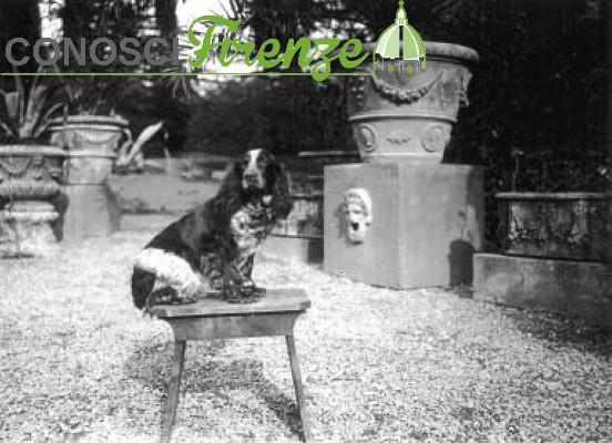 M. Nunes Vais, Il cane Teli-teli alla Capponcina