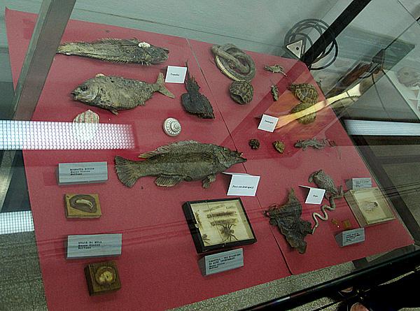 Preparati di Girolamo Segato nel Museo di Anatomia Normale dell'Università di Firenze