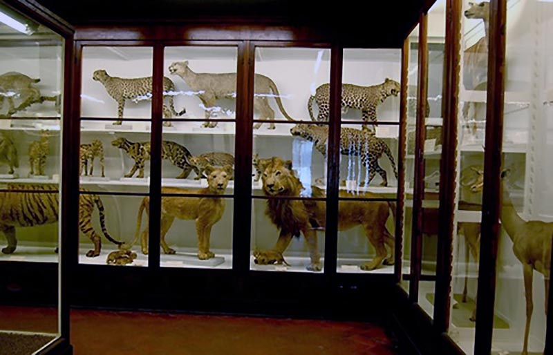 Visita Guidata Museo la Specola.